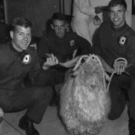 Morgan Donahue Goat